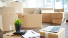 Evden Eve Taşınırken Bitkiler Nasıl Taşınmalı?